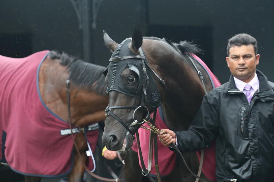 Image result for spirit of valor horse